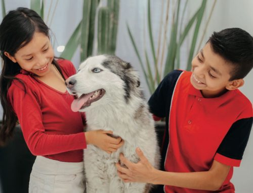 Why Do Kids Benefit from Having Pets?